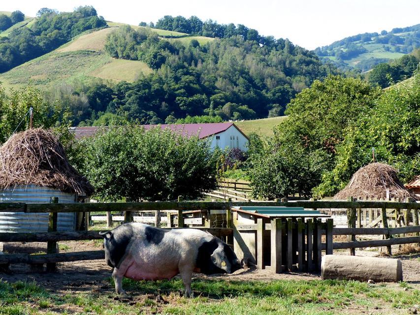 Image14 - Le Porc Basque