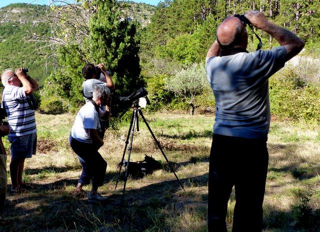 Observation des vautours à Remuzat